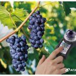 Инфракрасный Brix-метр для винограда