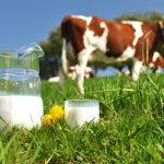 PAL-Colostrum для молочных фермеров